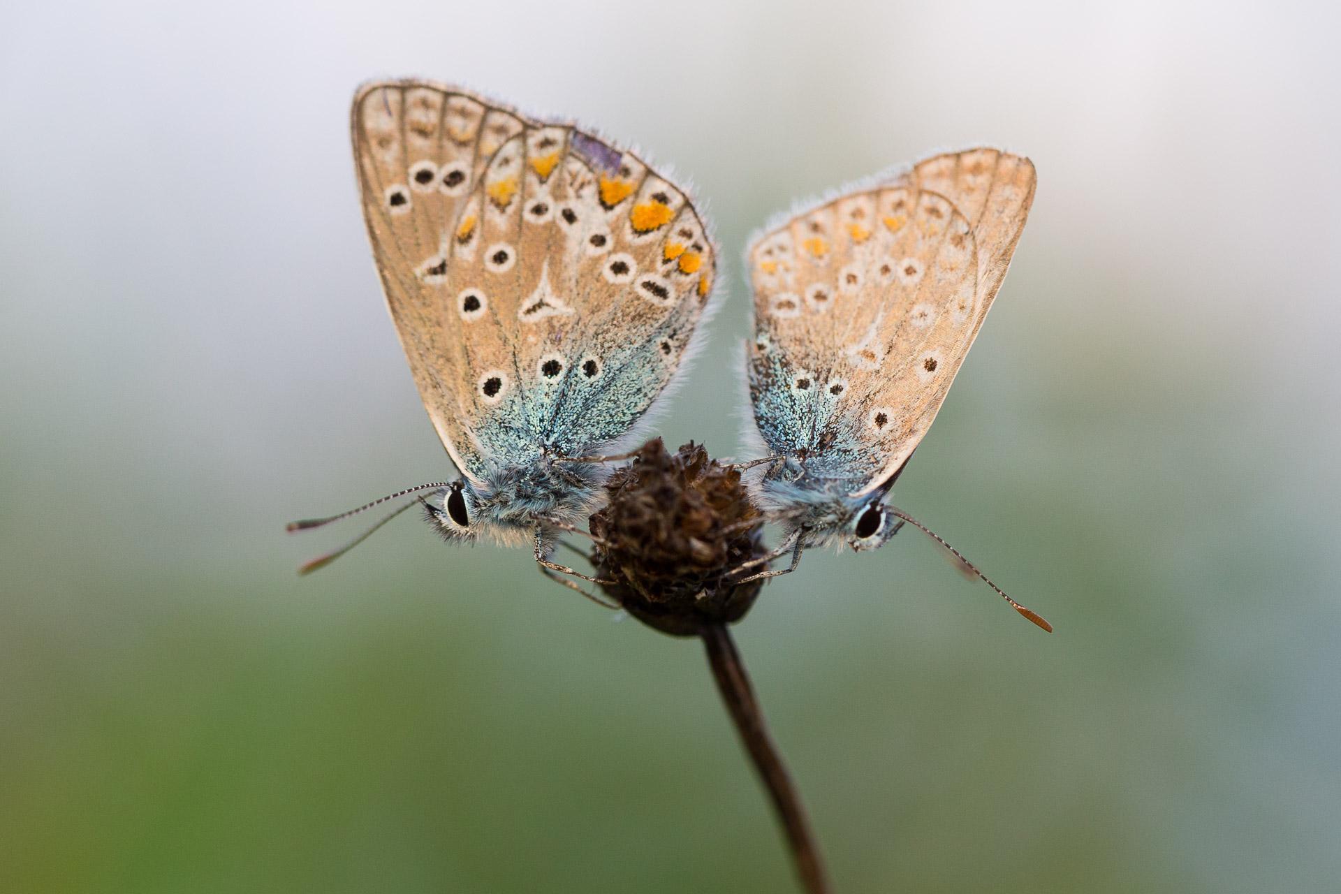 deux-azures