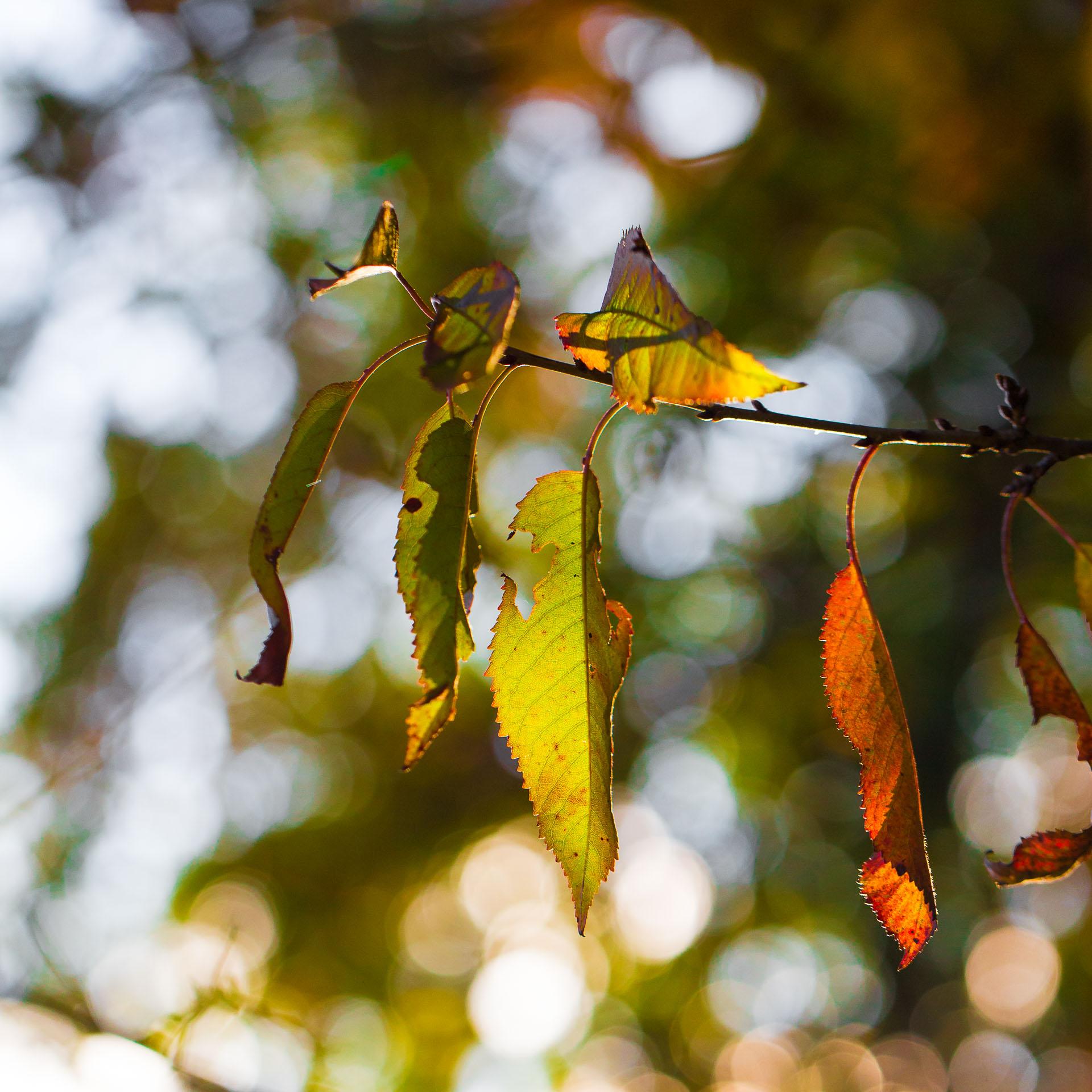 feuilles-transparence