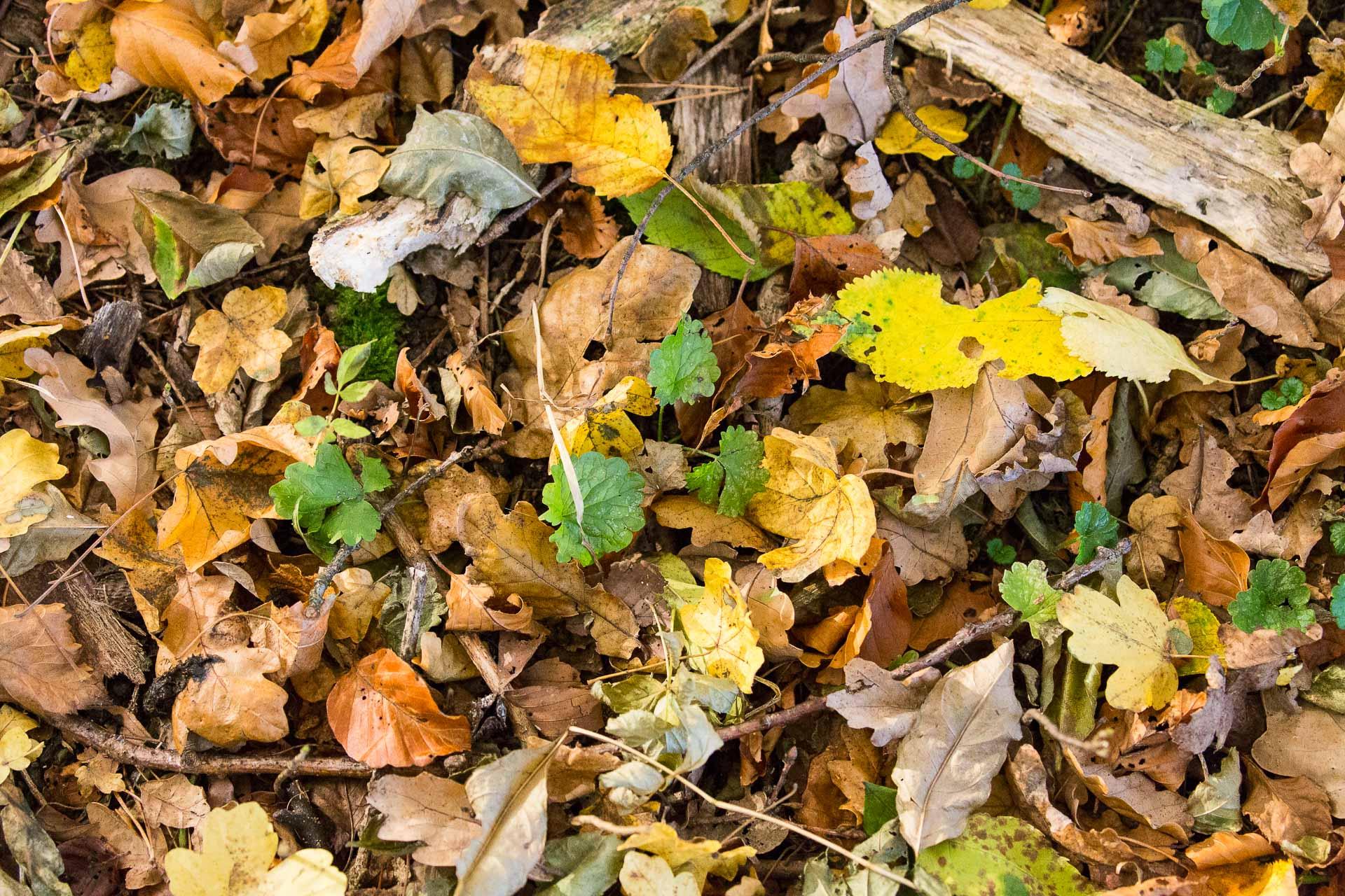 sol-feuilles