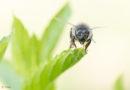 Rencontre: quatre plans pour une abeille